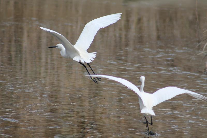 Bianco volo  di Rosenrot93