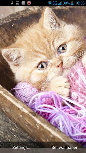 새끼 고양이라이브 배경 화면