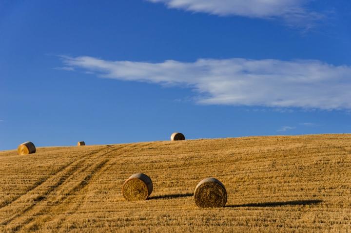 Cinquina di grano di Pater84