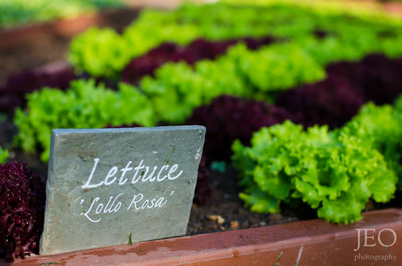 Photo: White House Vegetable Garden