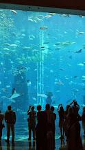 Photo: Im Aquarium in Atlantis