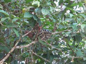 Photo: A snake
