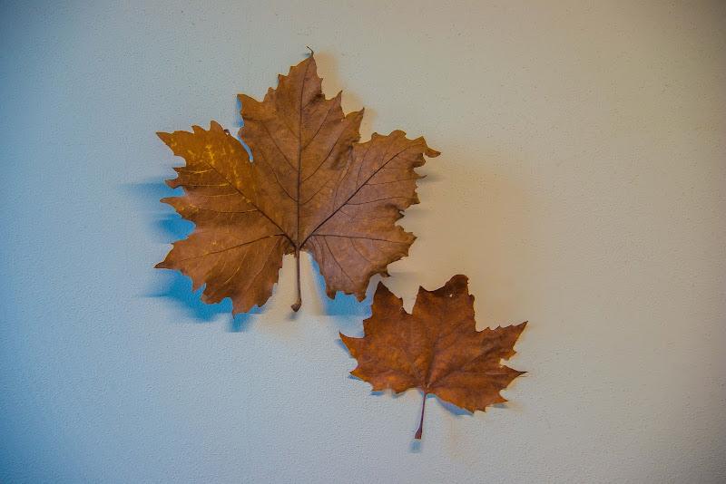 foglie di walterferretti