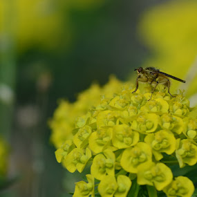 Bug  by Stani Georgiev - Animals Insects & Spiders ( plant, macro, bug, yellow )