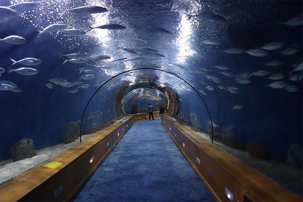 Il cammino sotto le acque di Il_Viaggiatore