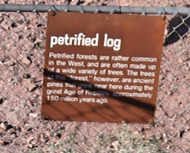 Photo: Petrified log in Vally of Fire State Park.