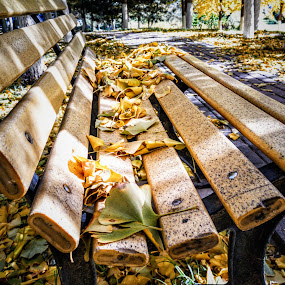 Bench in park in autumn by Francisco Little - Instagram & Mobile Android ( bench, autumn, park,  )