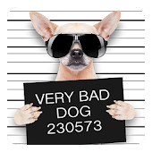 Funny Bad Dogs Live Wallpaper