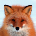 Fox HD LWP Lite icon