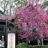 【內灣老街】櫻木花道