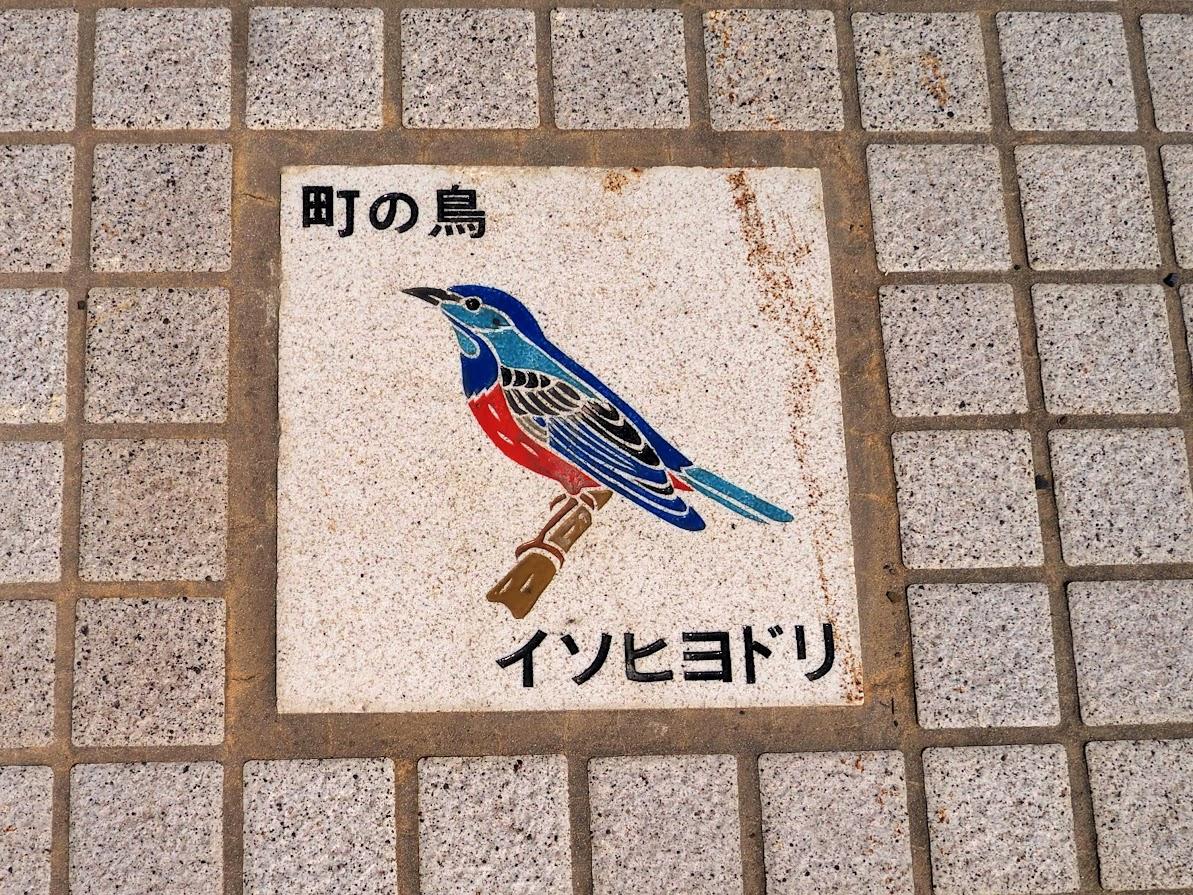 町の鳥 イソヒヨドリ