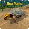 Box Turtle Simulator