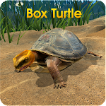 Box Turtle Simulator Icon