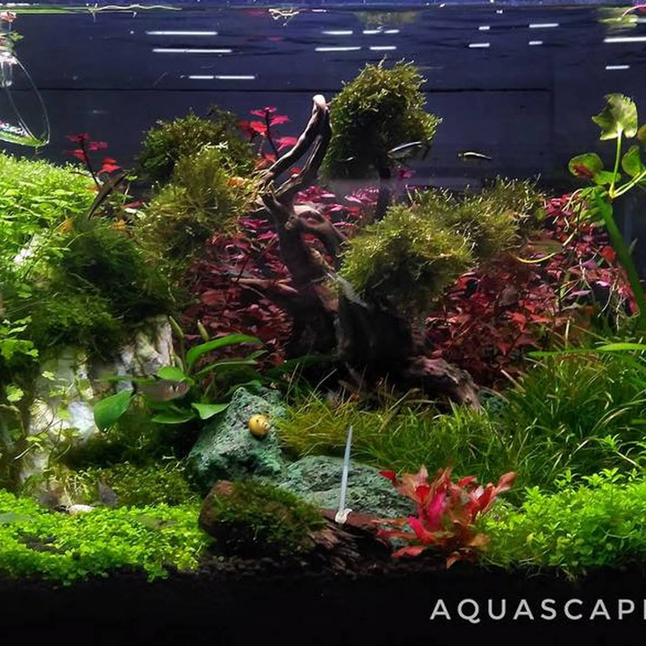 Aquascape Shop Kl