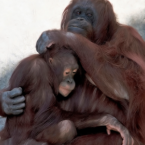 Orangutan 001.jpg