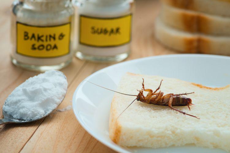 Dobrym rozwiązaniem na karaluchy jest też żel wabiący lub pułapki lepowe