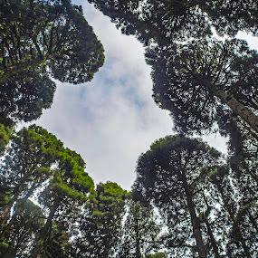 Touching the Sky by Sandip Banerjee - Nature Up Close Trees & Bushes ( forest, leaves, nature, jungle, trunk, trees,  )