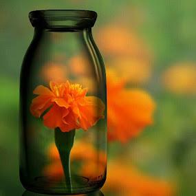 Flower in bottle by Danang Sujati - Instagram & Mobile Instagram ( padepokankalisurut, photooftheday, all_shoot, android, statigram, danangsujati, natgeo, igmasters, sintang, instagram, instagnation, indonesia, ignesia, instanusantara, instaphoto, instagood, webstagram, nikon, kalimantanbarat, pip, flower )