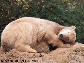 Photo: Knut genehmigt sich noch ein Nickerchen ;-)