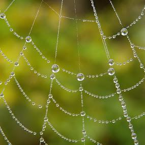 Pearls by Valentina Masten - Nature Up Close Webs