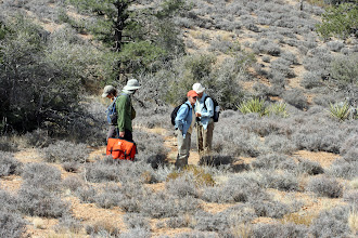 Photo: Field Crew surveying