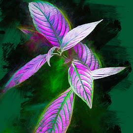 Purple Majesty by Dave Walters - Digital Art Things ( macro, flowers, nature, canon rebel, purple )