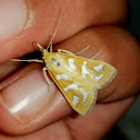 Fractured Western snout moth
