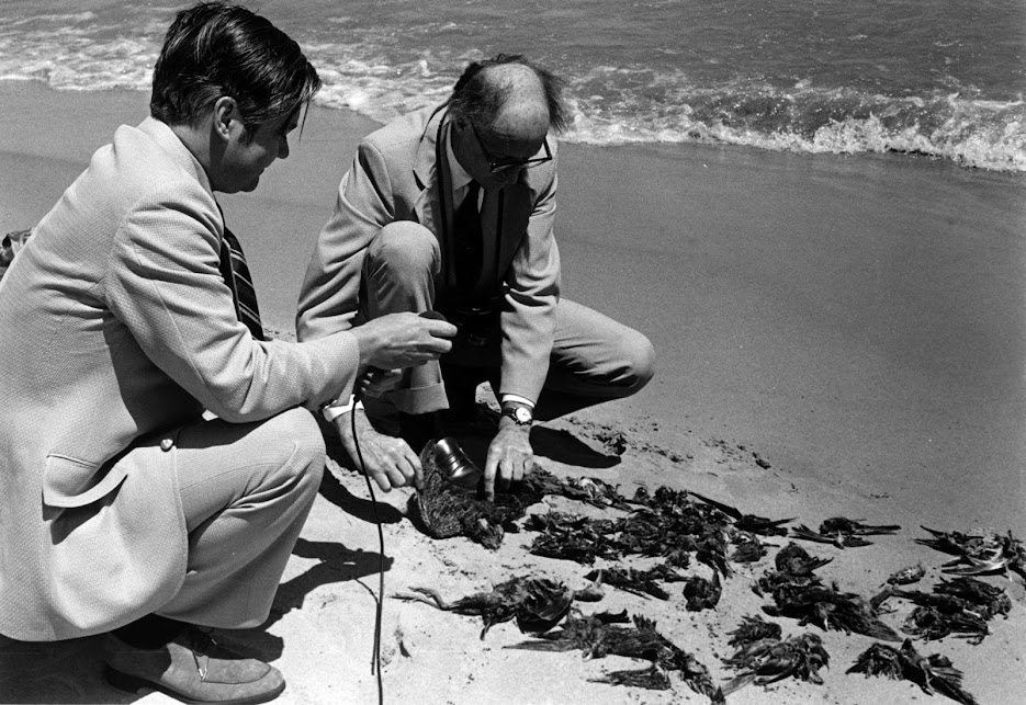 William J. Beecher at a local beach along Lake Michigan with a reporter looking at birds killed by a major storm, 1969
