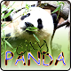 City Panda (game)
