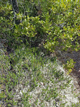 Photo: Broom crowberry and huckleberry
