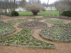 Photo: the garden