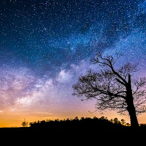 Majestic  by Trevor Pottelberg - Landscapes Starscapes ( scenic photographer, shooting star, landscape, brownsville, tree, night photography, constellations, t.pottelberg, corinth, dark, falling star, canada, t.pottelberg scenics, scenics, ontario, scenic, astronomy, startrails, nightscape, field, trevor pottelberg, stars, night, galaxy, heavens,  )