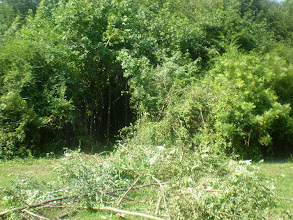 Photo: the mess we left after getting busy with the hedge clippers and the ax