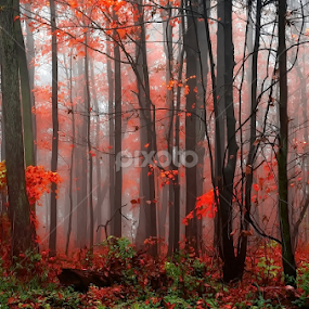 step into a magic forest by Andrzej Pradzynski - Landscapes Forests ( red, fog, autumn, foliage, fall, trees, forest )