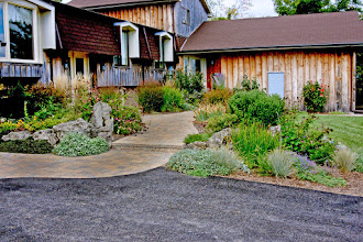 Photo: This drought-tolerant landscape hides three rain gardens!