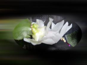 Photo: kaktusz 4