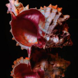 Abstract Colorful Sea Shell by Dave Walters - Digital Art Abstract ( macro, nature, lumix fz2500, abstract, colors, digital art )