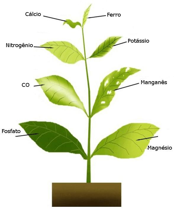 Sintomas de deficiência nutricional em plantas (Fonte: Semear & Plantar)
