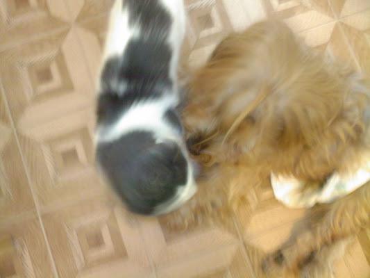 Cane e gatto amici per la pelle di filodani