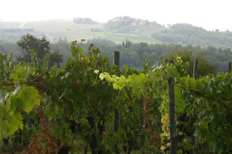 Photo: In the vineyard behind our villa in Chianti, Italy
