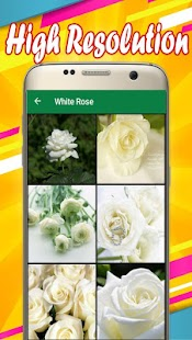 White Rose Wallpapers - náhled