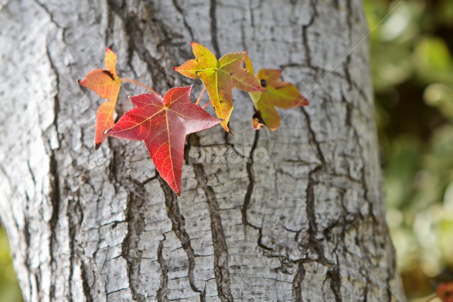 look..no branches by Rose Johnson - Nature Up Close Leaves & Grasses ( pwcfallleaves, autunm, fall, october, leaves )