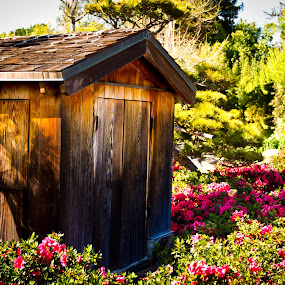 Shed on Japanease park by Jorge Villalba - City,  Street & Park  Vistas ( water, shed, park, japanese, flower )