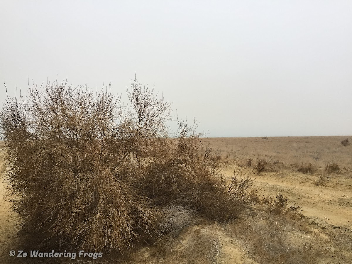 Off-the-Beaten Path Uzbekistan: A 3-Day Aral Sea Tour // Saksaul Plant to Limit Desertification of the Aral Sea