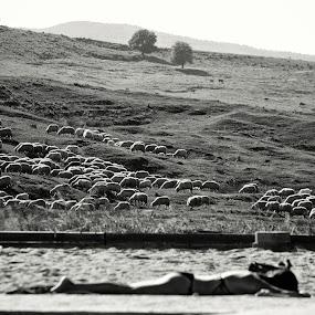 Watching the sheeps by Radu Moldovan - Landscapes Travel ( hill, sheeps, sunbath )