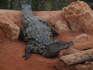 Ferme aux crocodiles à partir des Chambres d'hôtes de l'Esclériade en Vaucluse