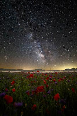 Immersa in un tappeto di fiori e di stelle di wanderingewa