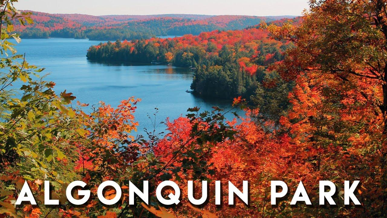 Image result for algonquin park