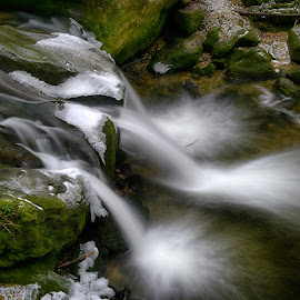 by Marco Bertamé - Nature Up Close Water ( moss, cascade, woild, long exposure, water, flowing,  )