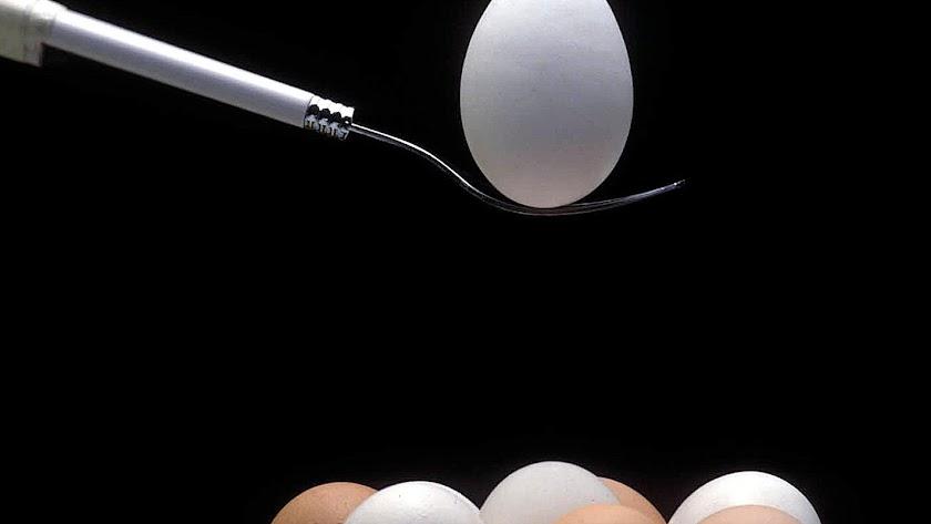 El colegio de Veterinarios advierte sobre el uso de huevos.